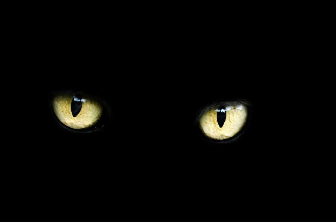 Nachtsichtgerät: Test & Empfehlungen (04/20)