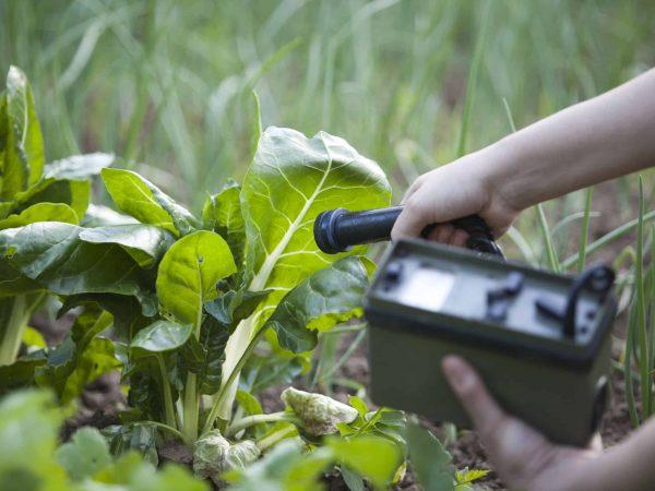 18488213 – measuring radiation levels of vegetables